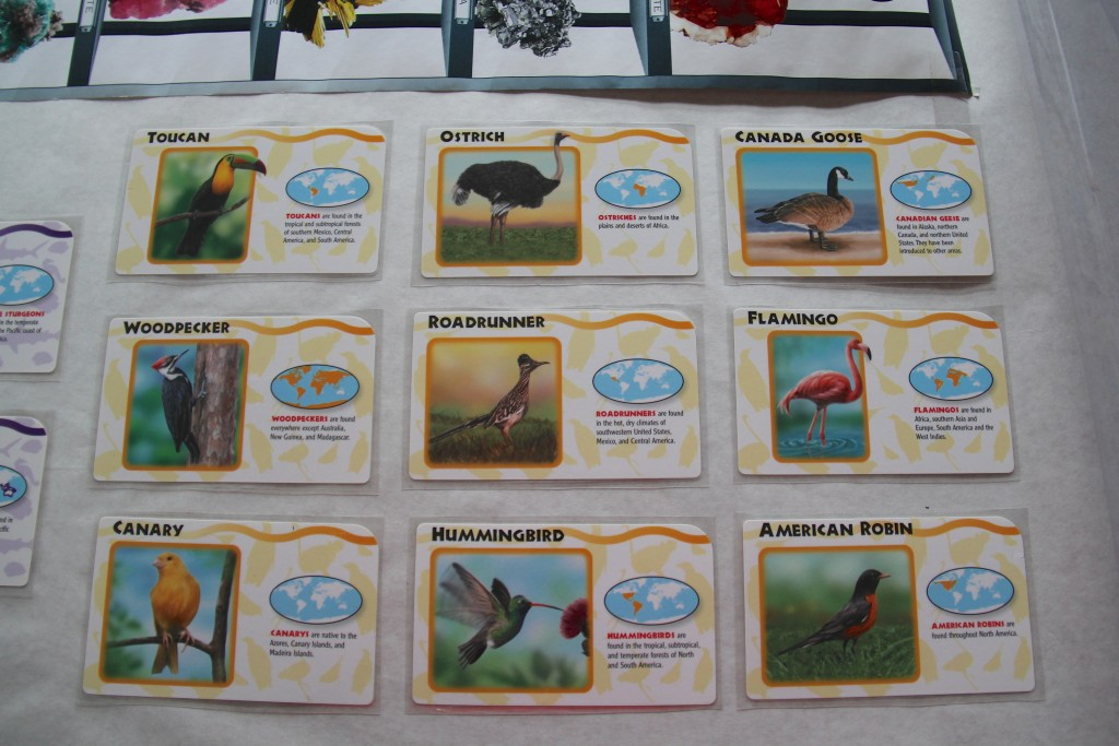 bird pocket flashcards